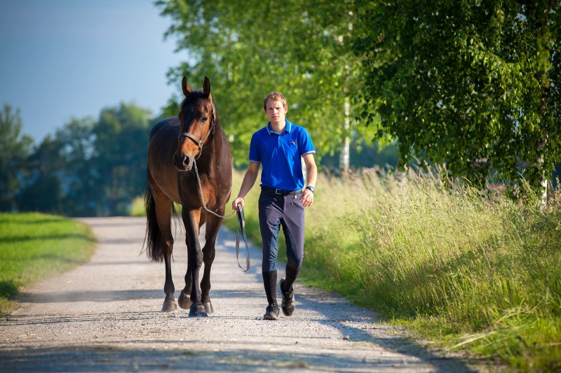 Pferdesport / Beritt